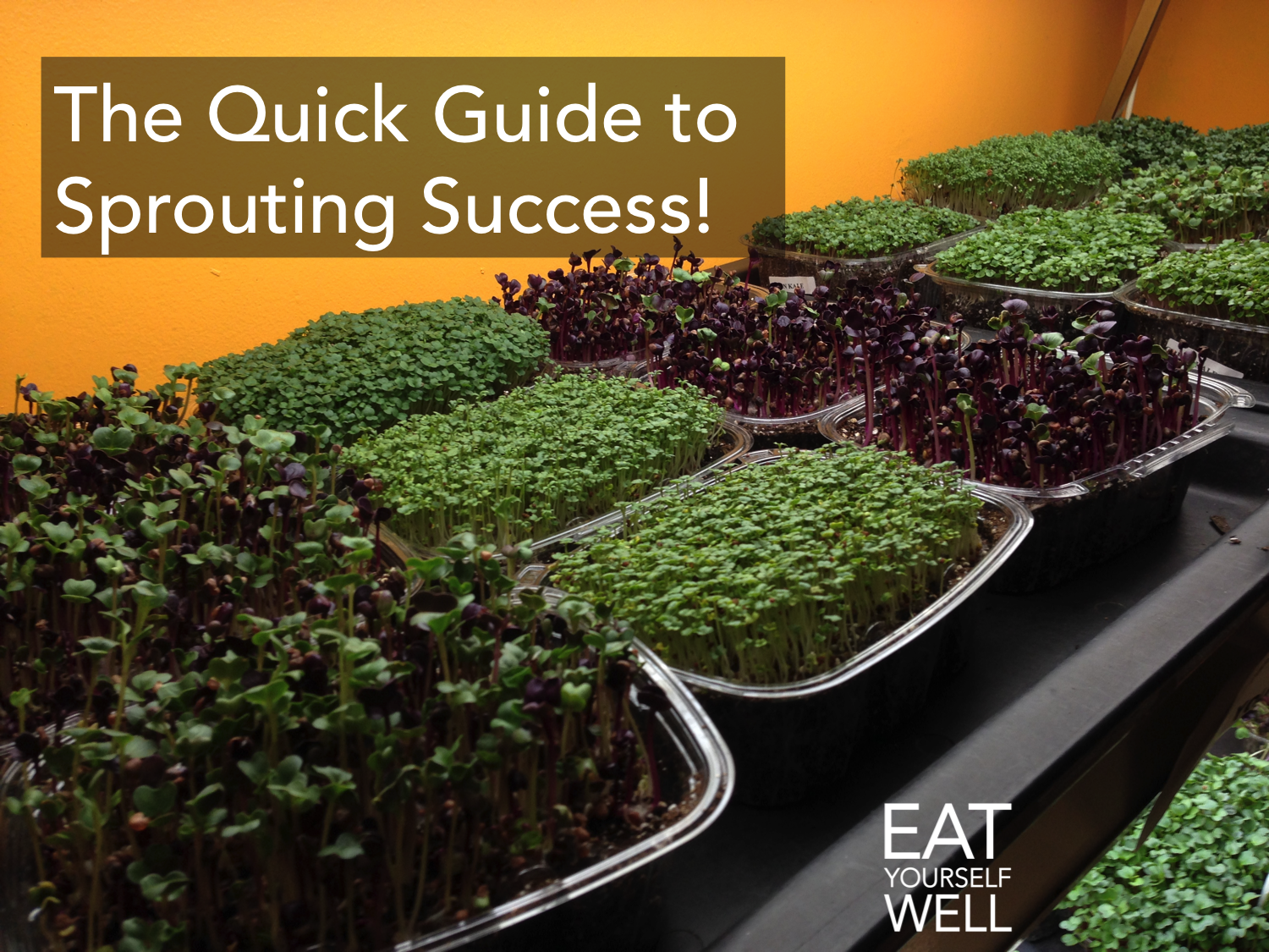 SproutingSuccess