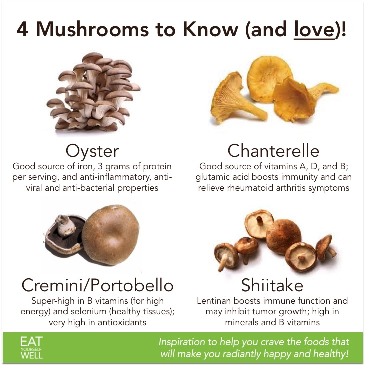 4 Mushrooms to Know - Jennifer SIlverberg